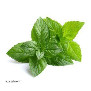 گیاه دارویی نعناع - نعناع - روغن نعناع